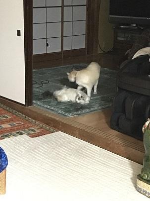 寛ぎちぃことユキ