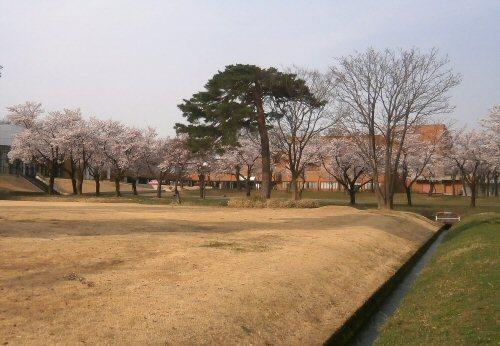 02c 500 20180403 桜並木用水
