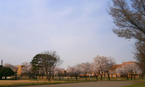 02d 500 20180403 桜並木 妙高山見えず