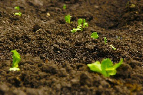 0a 500 soil