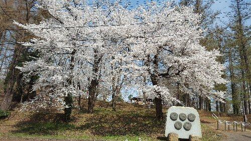 1d 500 20180413 経塚山桜01