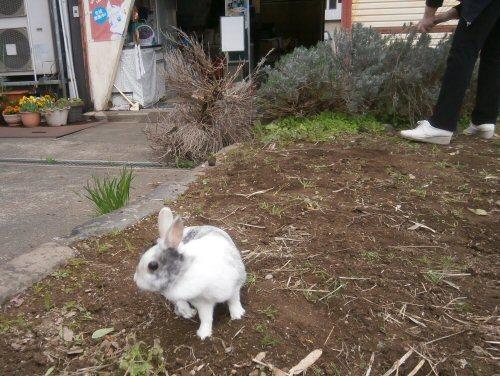 1a 500 20180417 小春LL菜園04R lavender