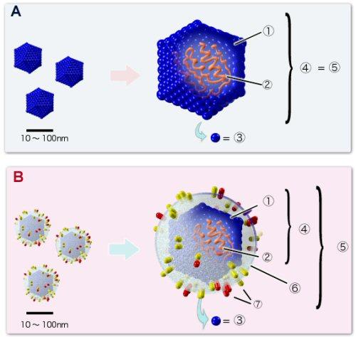 9b 500 virus structure