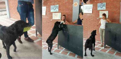 2a 600 Negro-the-Dog-Angela-Garcia-Bernal