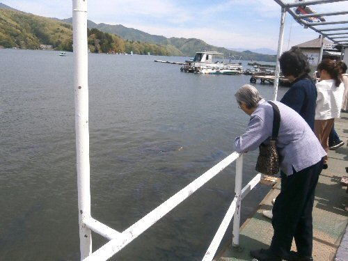 01a 500 20180506 野尻湖トメさん礼子鯉に