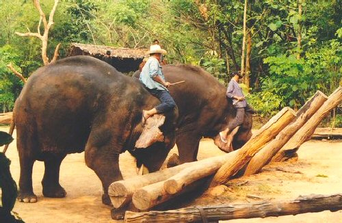 04b 500 working men on an elephant