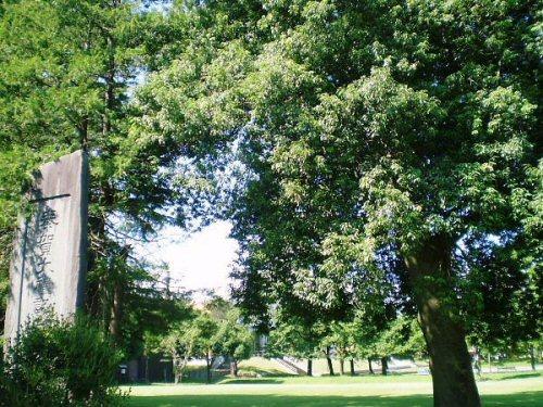 01b 500 20110807 大礼記念碑横の木は?