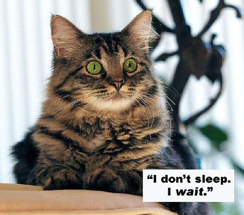 09a 500 cat I dont sleep