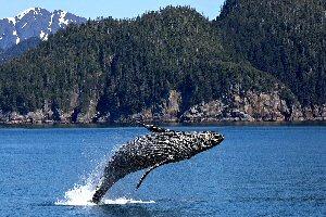 04b 300 クジラ whale