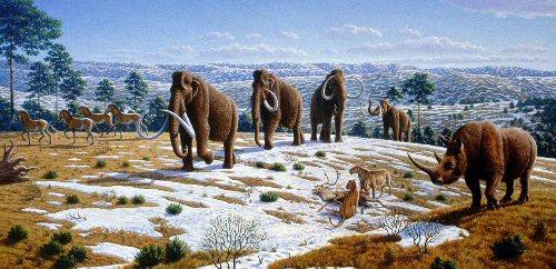 01b 500 Quaternary extinction