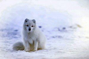 01d 300 arctic fox