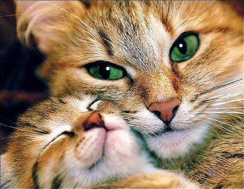01a 500 cat kitten