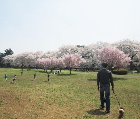 野川公園180328⑦