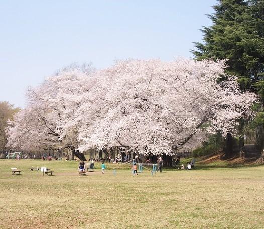野川公園180328⑭
