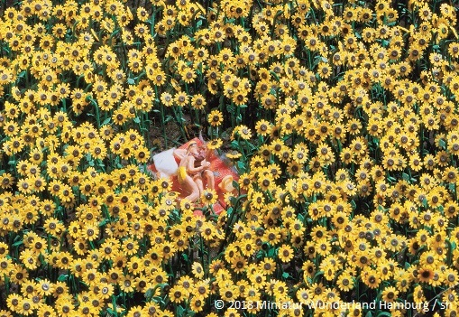 harz-liebespaar-sonnenblume2.jpg