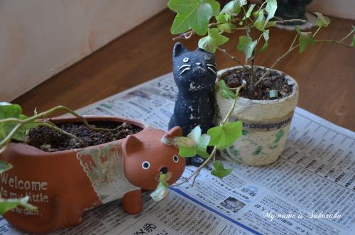 庭の猫ちゃんたち