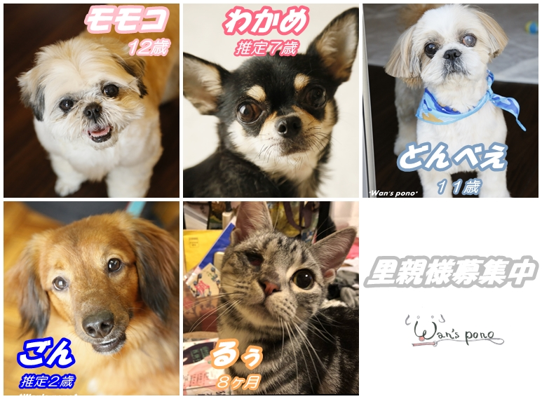 cats_201804191517236dc.jpg