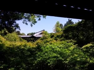 tofukuji-aomomiji