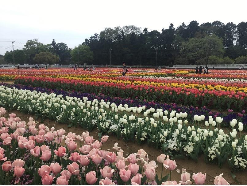 あけぼの山公園4