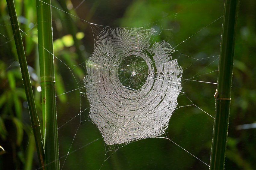 180513クモの巣