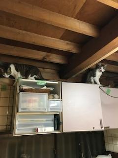 成田邸施工中ネコ2