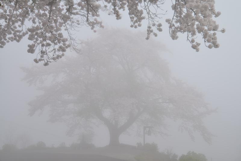 霧に包まれて