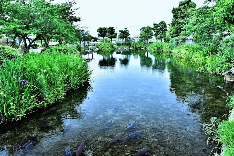 水辺の情景