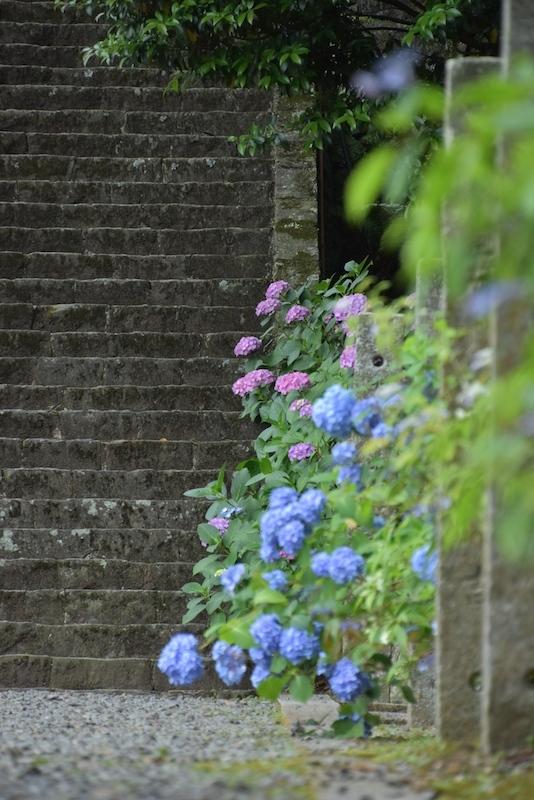 紫陽花の杜 惣河内神社