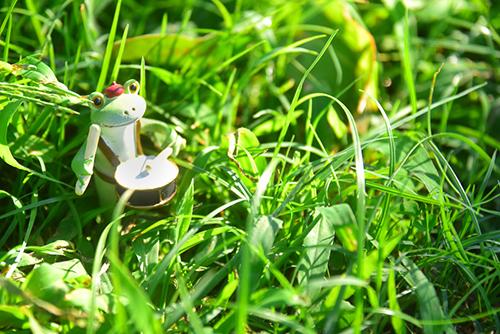 ツバキアキラが撮ったカエルのコポー。野原でセッションをしている、ラッパのコポタロウと太鼓のコポタロウ。