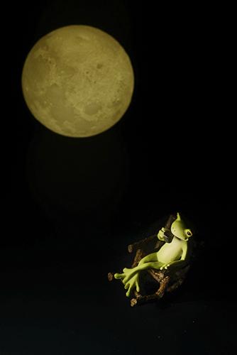 ツバキアキラが撮ったカエルのコポー。満月を眺めながらコーヒーを楽しんでいるコポタロウ。