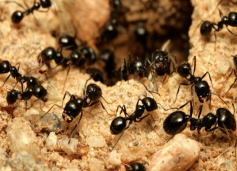 アリの写真