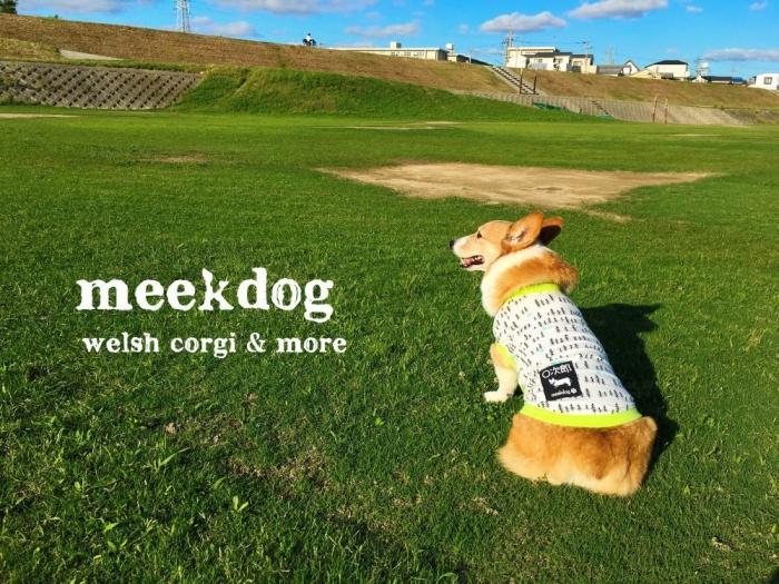 meekdog1147.jpg