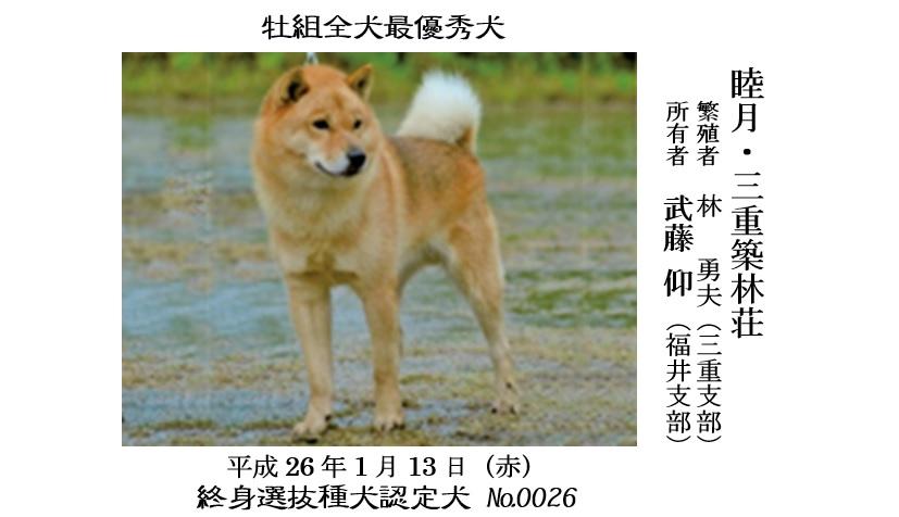 第25回岐阜CH展1-03-最優秀犬牡