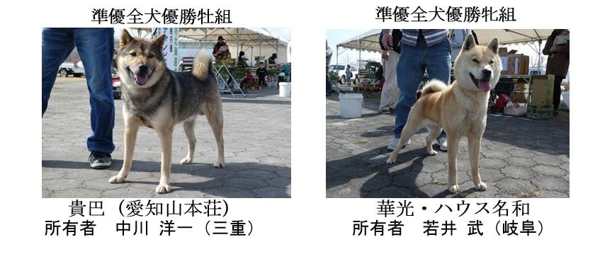 第25回岐阜CH展1-06-準優全犬