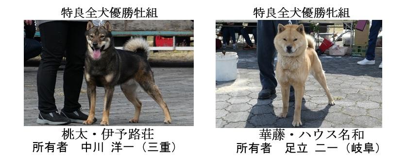 第25回岐阜CH展1-07-特良全犬