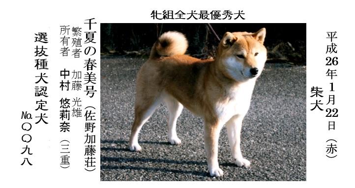 第25回岐阜CH展1-11-全犬種最優秀犬牝