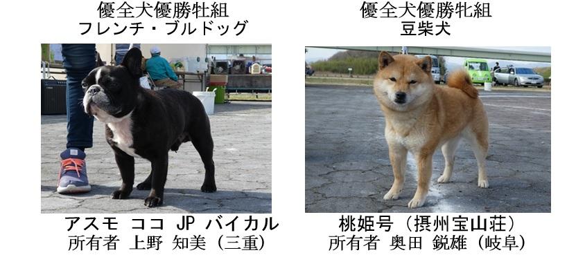 第25回岐阜CH展1-13-全犬種優全犬