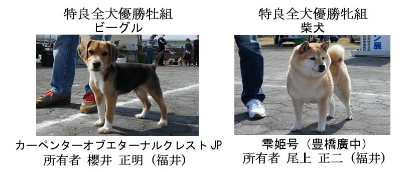 第25回岐阜CH展1-15-全犬種特良全犬