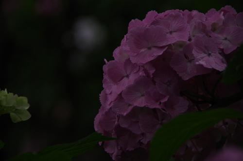 IMGP3311.jpg