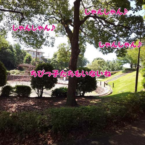 DSC_0087_convert_20180710173243.jpg