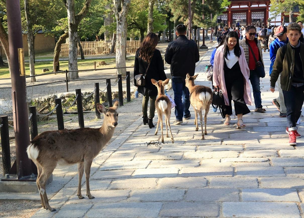 ブログ 鹿は餌をくれそうな人を見分けます.jpg