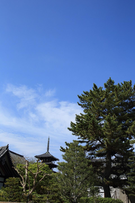 ブログ 法隆寺 東院伽藍からの五重塔.jpg