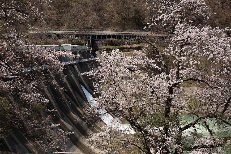 ブログ ダム湖からの放水と桜.jpg