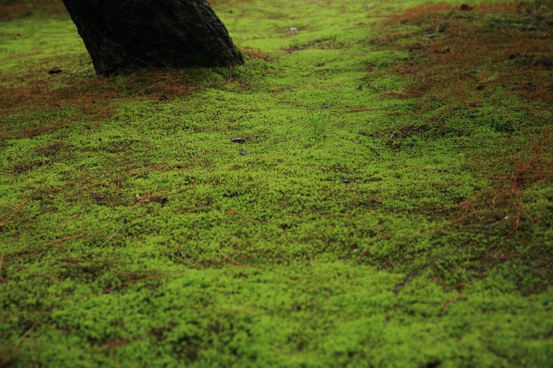ブログ 銀閣寺の苔庭.jpg
