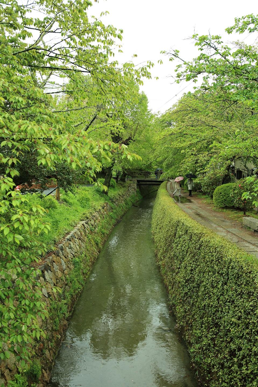 ブログ 雨中の哲学の道のお散歩デート.jpg