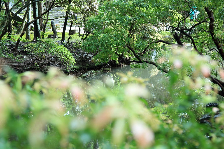 ブログ 法然院のお池.jpg