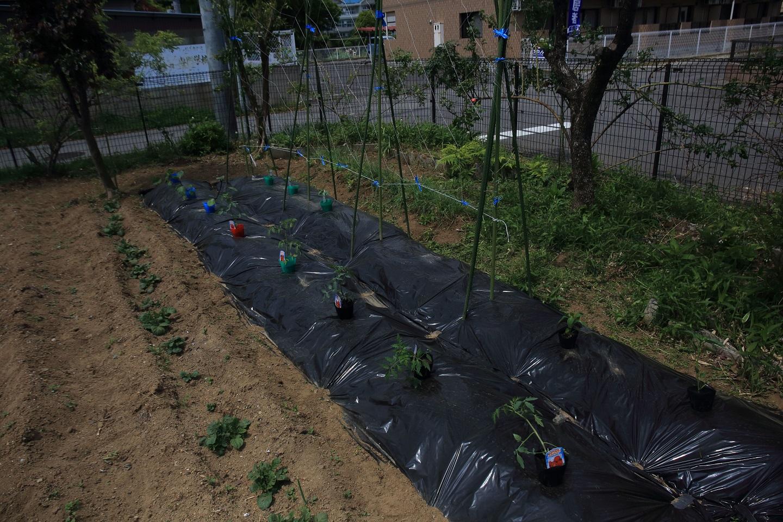 ブログ 2018 4 30 菜園状況.jpg