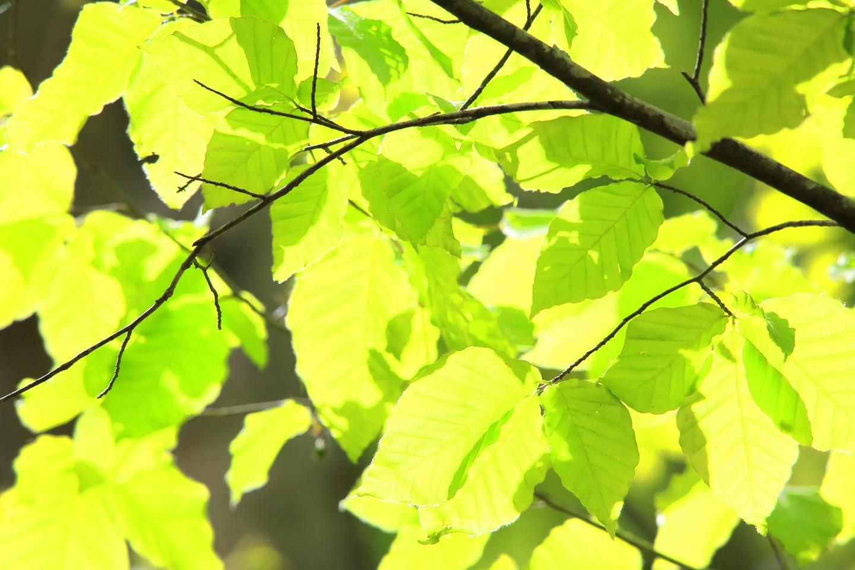 ブログ 初夏の日差しは緑色.jpg