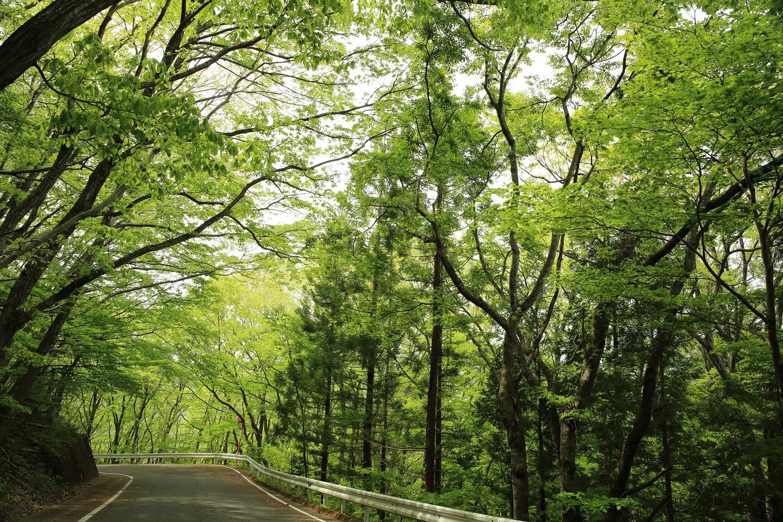 ブログ 新緑のドライブ.jpg