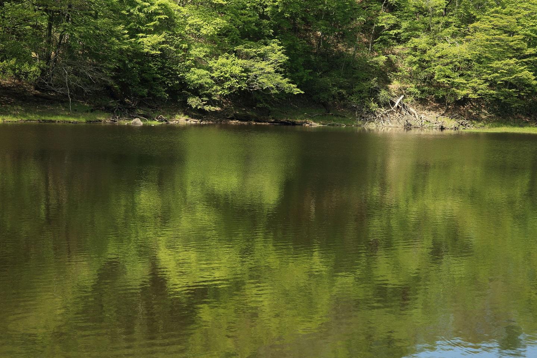 ブログ 緑の絵の具を湖畔に.jpg